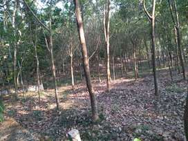 Plot with 2km near from Nellikunnam town