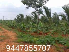 Agriculture Land for sale