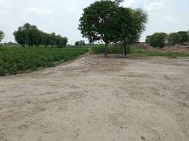 Colony & Agriculture land with 17 marla covered area house