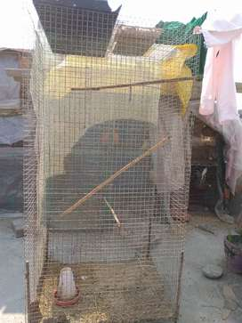 Bird Cage for all types of pet