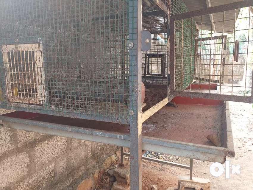 Chicken  cage 0