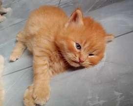Yg Serius Sayang Sama kucing
