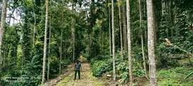 155 acres Coffee pepper estate sale in kodaikanal