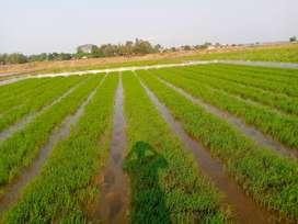 Dijual cepat tanah sawah produktif