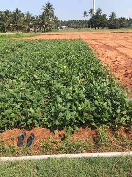 Agricultural land 8 lakh per acer call me (944/260/59/63)