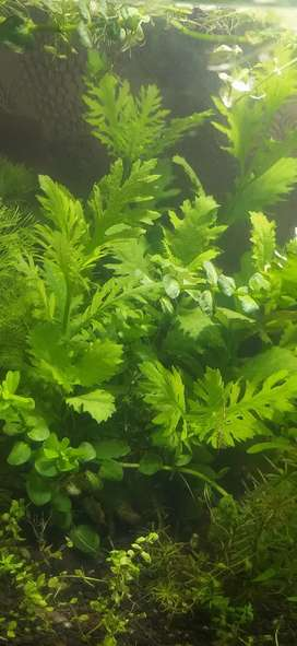 All types of aquarium plants are available.