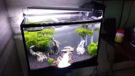 Jual Aquarium Aquascape Fullset