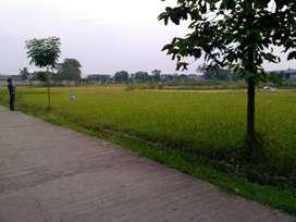 Tanah Sawah SHM 1274m2 lokasi Strategis Cibatu Purwakarta