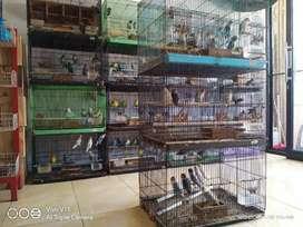 Dicari jaga toko dan merawat burung