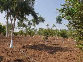 Vardhan Prakruthi Vanam II a farm land project at amangal