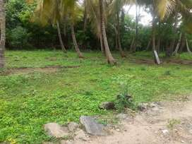 farm house plot @ 2000000