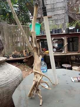 Kayu tanaman tlogosari
