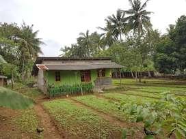 Jual cepat tanah di desa Bonisari