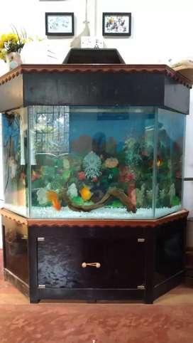 Fish tank semi haxagon unique design