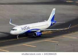 Indigo airlines urgent hiring for Computer operator
