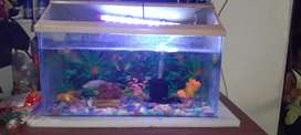 Fish tank with glass without pump light, fish