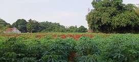 Tanah kebun dekat tol Borr