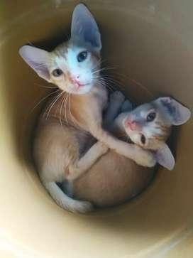 Cute cats 25 days