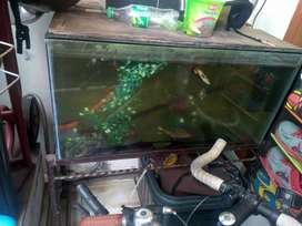 Set Aquarium 80 x 40 + Rak Besi