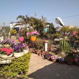 Succulents,hanging,cactus etc