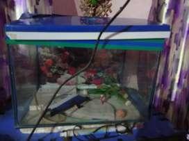 Aquarium .