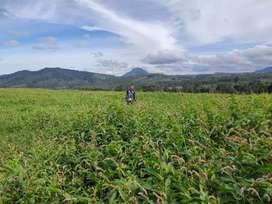 Peluang usaha Lahan Pertanian dan Peternakan'Disewakan Lahan Kosong