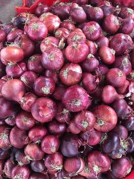 Egyption onion