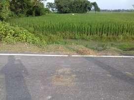 3 lakh rupay kattha jamin Ranipatra Chandi kathwa mai sale 1 acre