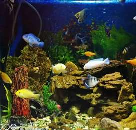 aquarium fullset semuanya termasuk ikan nya