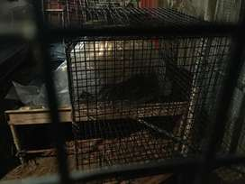 Bird cage or pets cage or poultry box cage