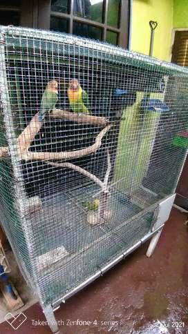 Burung Lovebird , Kandang  dan Glodok