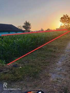 Tanah Sawah Di Berbah Cocok Buat Investasi Bikin Rumah / Perumahan