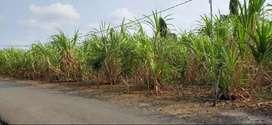 Dijual/Kontrak bangun Tanah 5000m Bengkulu