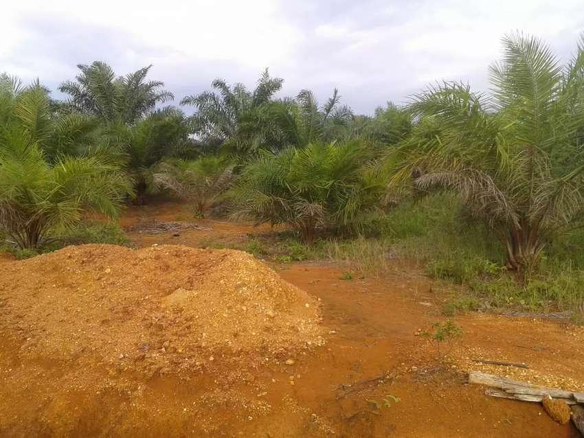 Jual kebun sawit sdh panen luas 2 ha berada di desa sumber arum km 26 0