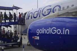 jobs in indigo airlines apply now
