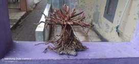 Aquarium bonsai