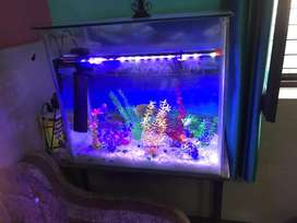 Aquarium in a genuine condition with table and accrs