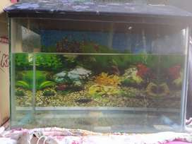Fish tank: In a very good condition.