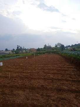 TERBATAS Kavling tanah idaman di Cihanjuang Gegerkalong