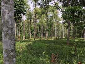 Plot for Sale in Wayanad (50 Cents / Half Acre)