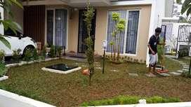 Jasa pembuatan taman rumah-jual tanaman hias dan rumput taman