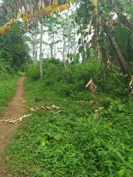 Tanah murah untuk perkebunan