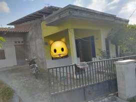 Rumah beringin Ngaliyan