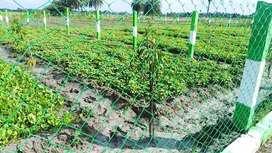 Agricultural / Farm Land for Sale in Melmaruvathur, Chennai