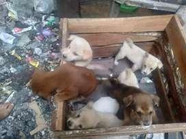 Dijual anak anjing +- 2 bulan, sehat terawat,lincah, bebas penyakit.