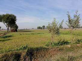 1 Murabba (25 Acres) agriculture land  is available  Near Nawab hotel