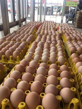 Jual Telur Ayam Fresh Murah Meriah 18.000