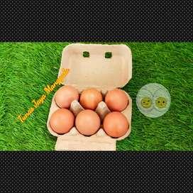 Tray egg karton/ paper egg 6 lubang kunci