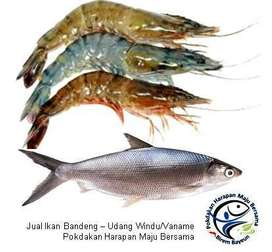 Jual Ikan Bandeng, Udang Windu dan Udang Vanamei