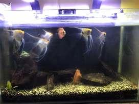 Aquarium for plantaion